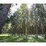 «Плитспичпром» проводит ряд противопожарных работ в лесах Калужской области