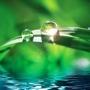 Запреты на использование озоноразрушающих веществ сделают холодильную индустрию лидером модернизации