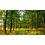 Новые требования ЕГАИС-лес полностью соблюдает ООО КМДК «СОЮЗ-Центр»