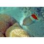 Коралловая штукатурка – красота и здоровая атмосфера в Вашем доме!