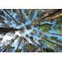 ООО КМДК «СОЮЗ-Центр» наращивает темпы  освоения лесов