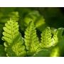 Как мультифункциональные стекла влияют на рост комнатных растений