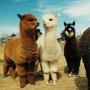 Мини-зоопарк в «Белом городе» - уголок живой природы
