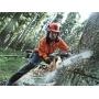 Порядок в лесных насаждениях – дело профессионалов