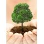 «Сабидом» строит дома, а вы – сажаете дерево!