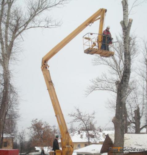 Спиливание кронирование деревьев и