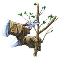 Обрезка опрыскивание деревьев