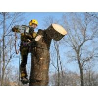 Кронирование и сплил деревьев