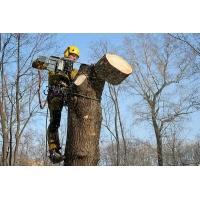 Вырубка деревьев и кустарников