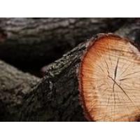 Валка деревьев спил деревьев колотые дрова