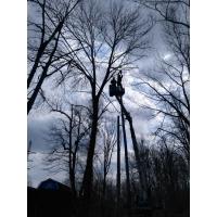 Валка деревьев, кронирование