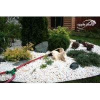 устройство альпийской горки, рокария, каменистого сада