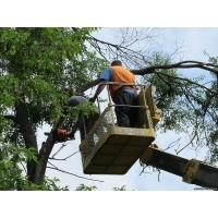 Спиливание деревьев. Вырубка и обрезка аварийных деревьев