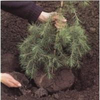 Посадка деревьев и кустарников. Озеленение общественных и частных территорий