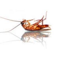 Уничтожение клопов,тараканов,муравьев,мышей,ос,мух и других.