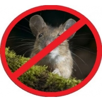 Морить, травить, вывести, избавиться от крыс и мышей