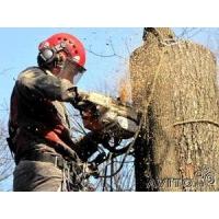 Спил, валка, кронирование, обрезка деревьев