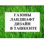 Газоны. Посев газона и продажа готового газона натурального   Узбекистан