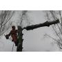 Удаление и кронирование деревьев   Ижевск