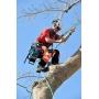 Кронирование, обрезка и удаление деревьев   Сочи