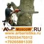 Вырубка деревьев, спил дерева, кронирование, корчевание пней   Москва
