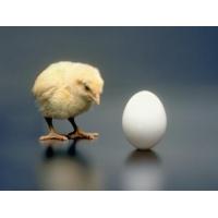 Мытье яиц птицы на предприятиях пищевой промышленности  Мук-Я
