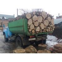 Тополиные деревья на дрова