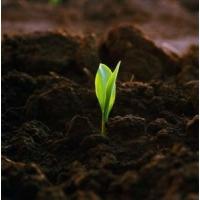 Грунт плодородный  растительный, чернозем