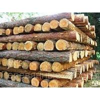 Столбы деревянные строительные  сосна