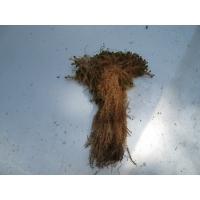 Продаю мох болотный,строительный в мешках т. 89518021727 мох мох болотный на срубы в мешках доставка