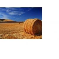 Сено луговое в рулонах и солома пшеничная