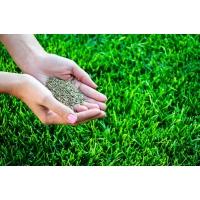 Семена для посева газона