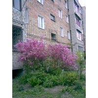 Продаю 2-комнатную квартиру в Артеме (ч/л)