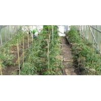 Опоры для садовых растений стеклопластиковые