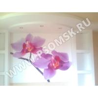 Натяжные стены в Омске