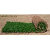 Рулонный газон. Семена травы Trifolium SUNSHINE