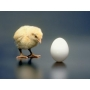 Мытье яиц птицы на предприятиях пищевой промышленности  Мук-Я Омск