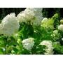 Декоративные растения   Казань