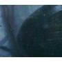 Скальный лист   Тольятти