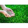 Семена для посева газона   Казань