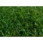 Искусственная трава ландшафтная Green арт. 20   Санкт-Петербург