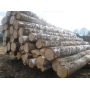 Продаем лес кругляк пиловочный   Челябинск