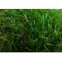 Искусственная трава арт. 35 GRASS ТР   Санкт-Петербург