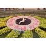 Часы цветочные   Санкт-Петербург