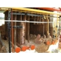 Водогрейные котлы марки  НР-18 для котельных Оренбург
