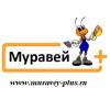 ИП Муравей+